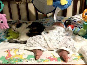 コリーと添い寝するまーびぃ2